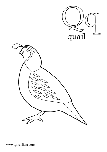 Printable Letter Q Coloring Pages : Quail coloring page. quail coloring pages minister